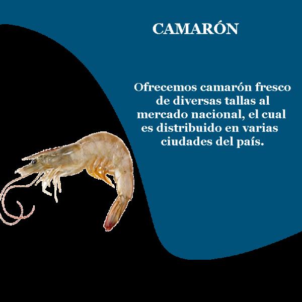 camaron_cola_blanca_prd_1